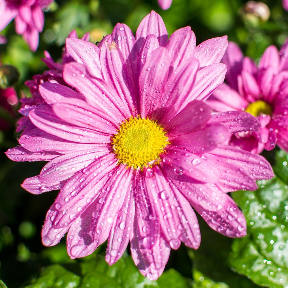 piante fiorite tw