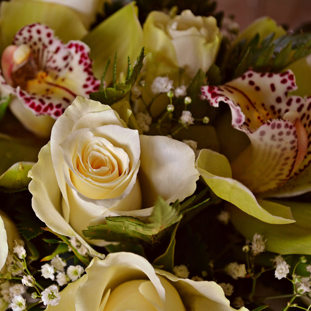 rosai e orchidee tw