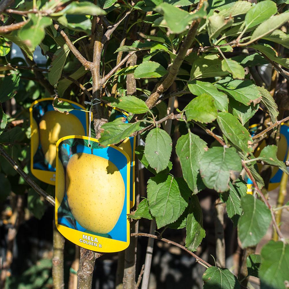 piante da frutto tw