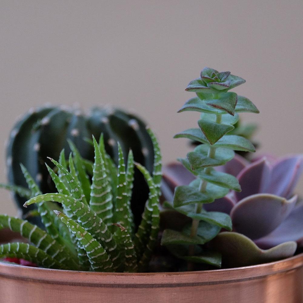 piante grasse tw