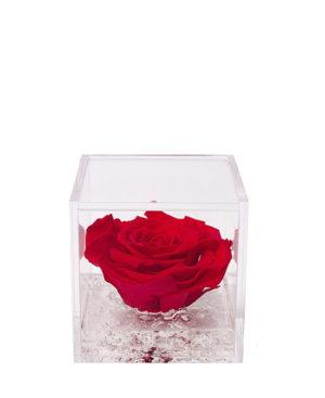 Flowercube – Rosa Bianca