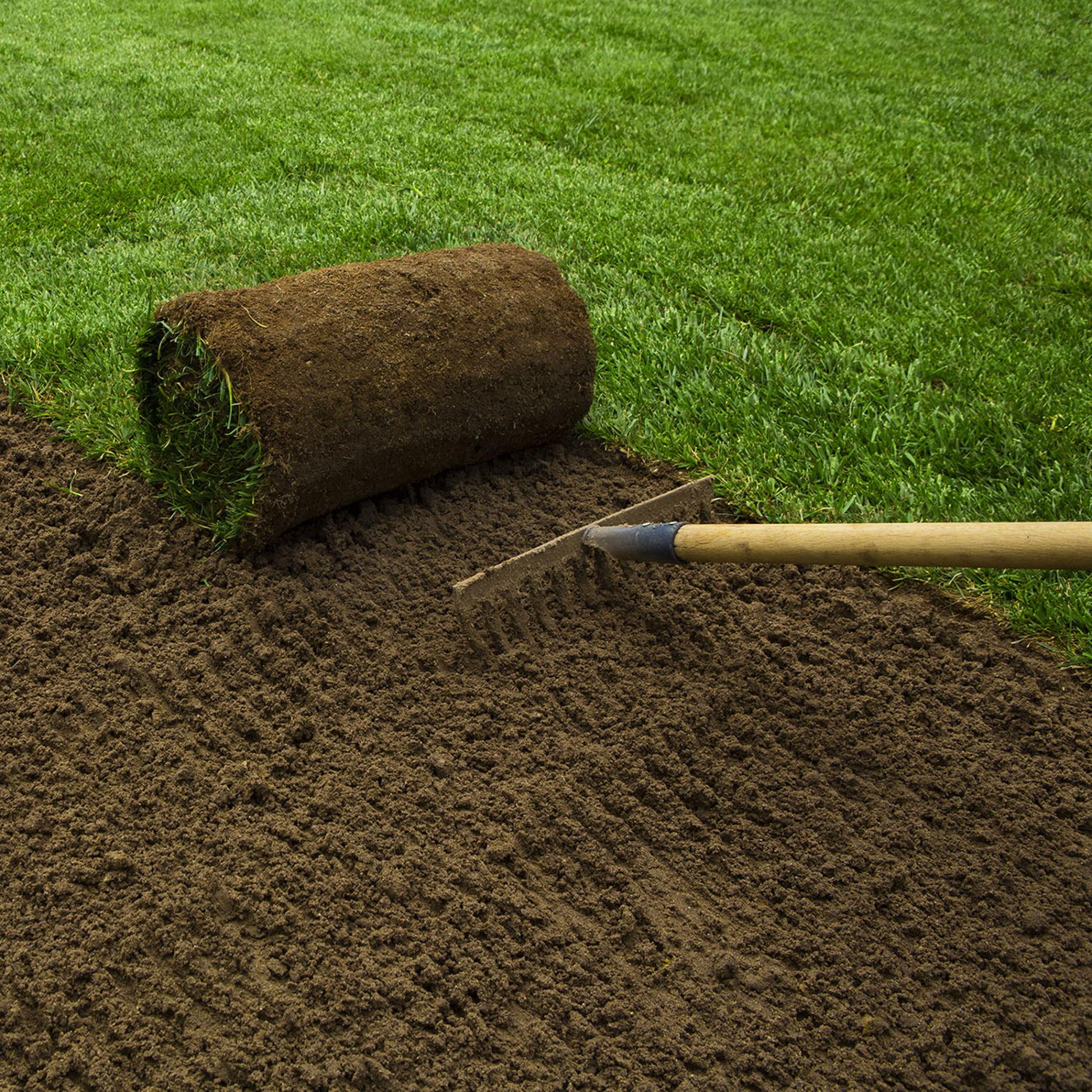 Formazione di tappeti erbosi
