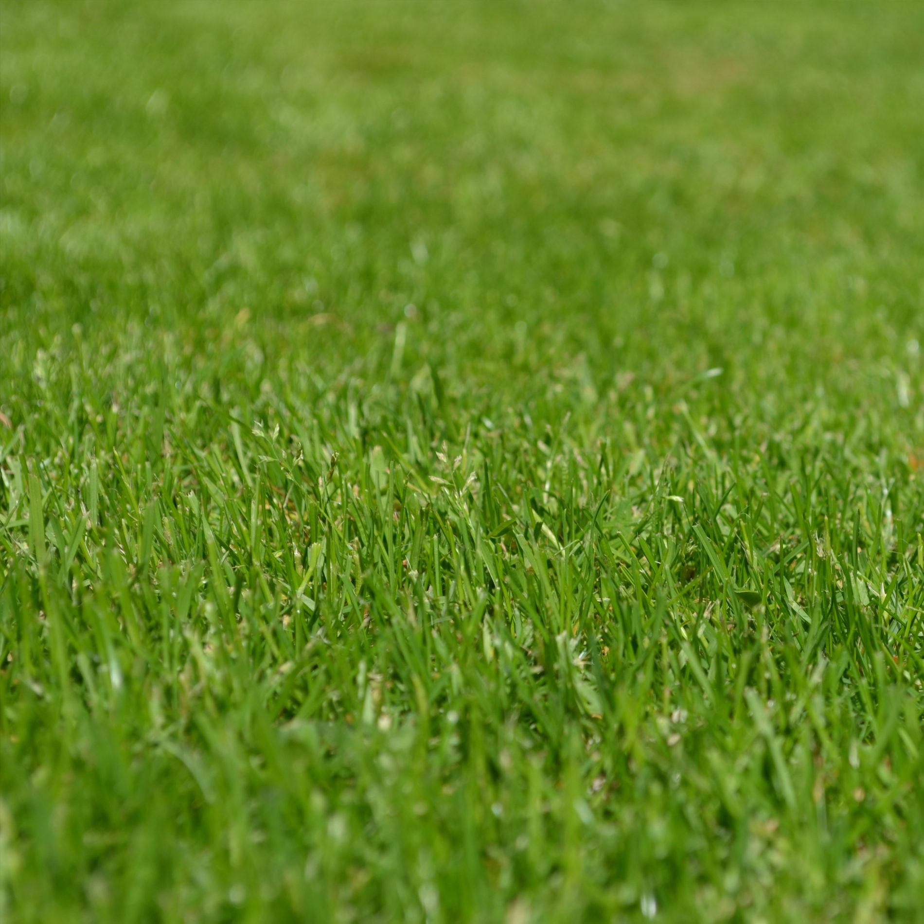 Proposte innovative per spazi verdi a ridotta manutenzione