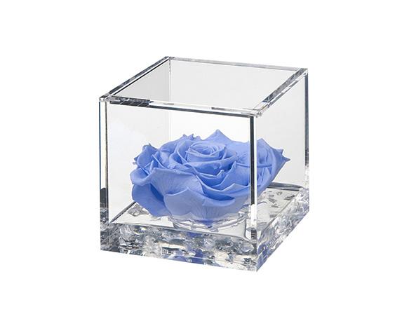 Flowercube Large Rosa Azzurra