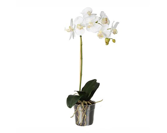 4APIANT001 orchidea uno stelo 1000x1000 1 1