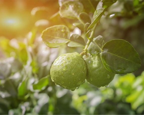 Hero enogastrononia bergamotto reggio calabria 3 1
