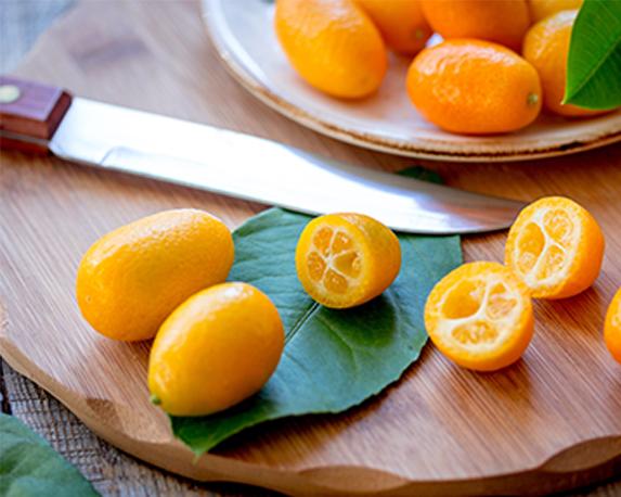 Kumquat Tree 1