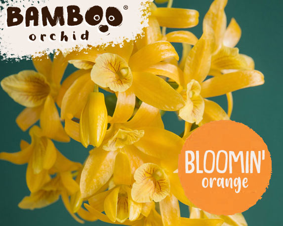 bloomin orange 2 1