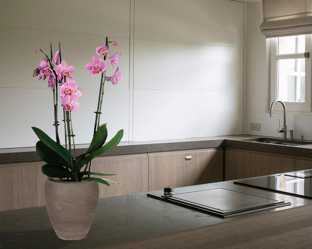 ciotola luna orchid basalto 13cm corino bruna vasi e coprivaso giardinaggio 2