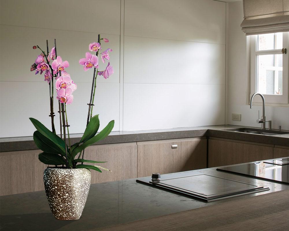 ciotola luna orchid flake basalto 13cm corino bruna vasi e coprivaso giardinaggio.jpgambiente