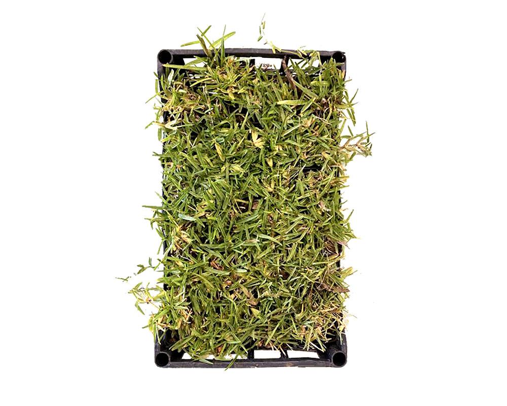 gramignone in vasetto piante e fiori prato