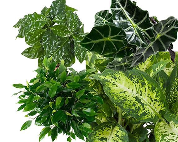 groene planten mix 1