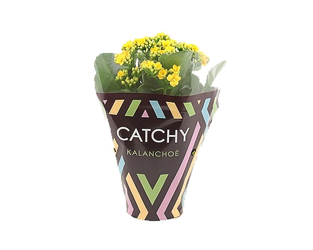 kalanchoe mix 5 colori piante grasse succulente piante per esterrno fiorite1 1