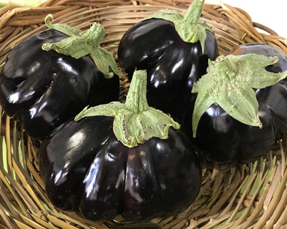 melanzana baffa innestata vaso14 ecofaber pianteepassione 2 1