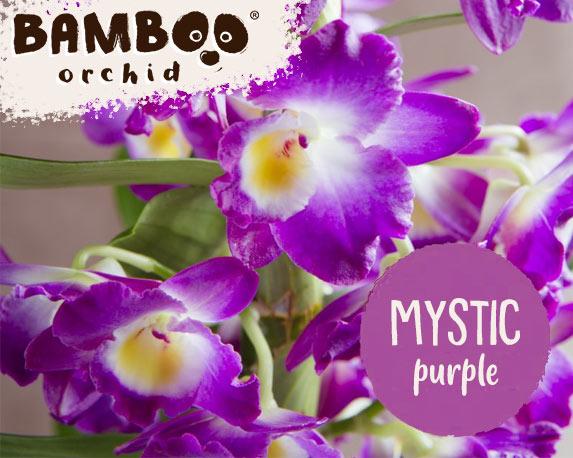 mystic 2 1