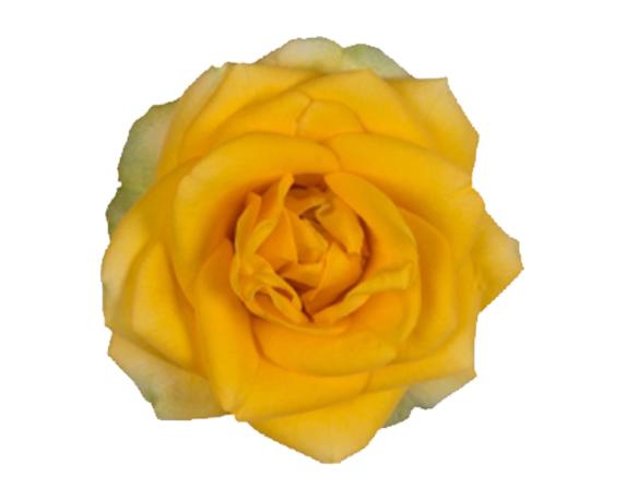 optimized victory elouise bloem 1