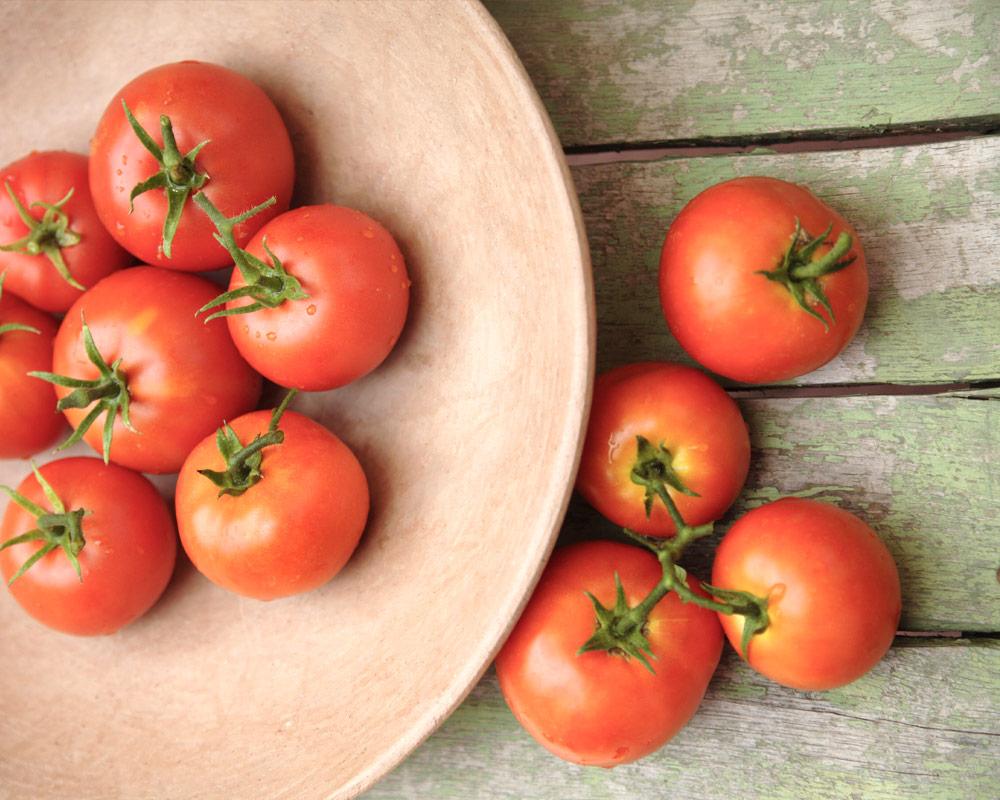 pomodoro tondo liscio innesttao vaso 14 eco faber piante e passione 2 1