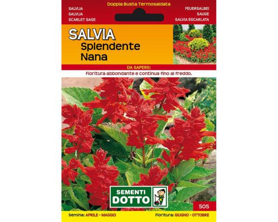 Extra Salvia Splendente Nana