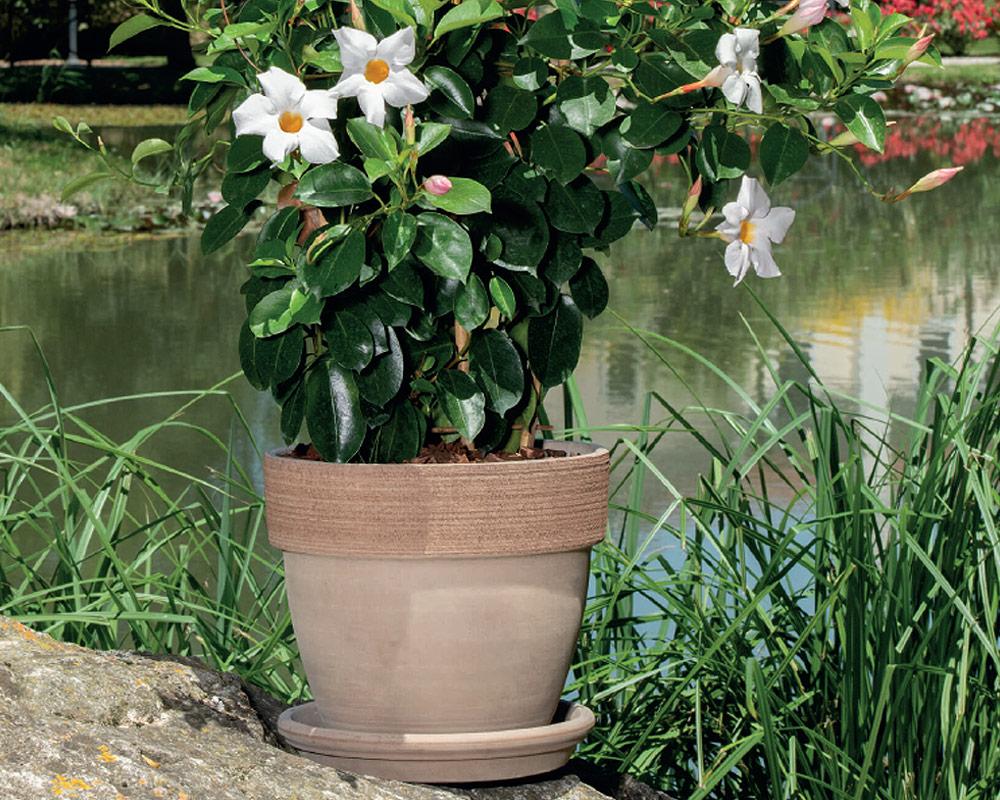 vaso palladio graffiato terracotta corino bruna vasi e coprivaso giardinaggio ambiente