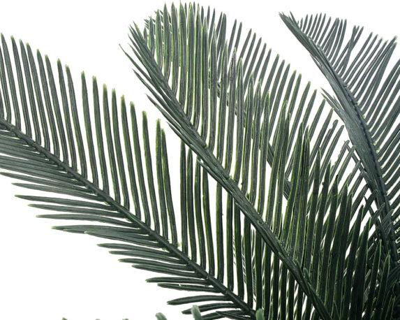 ARCANTO PHOENIX palmizi piante da esterno piante verdi 2