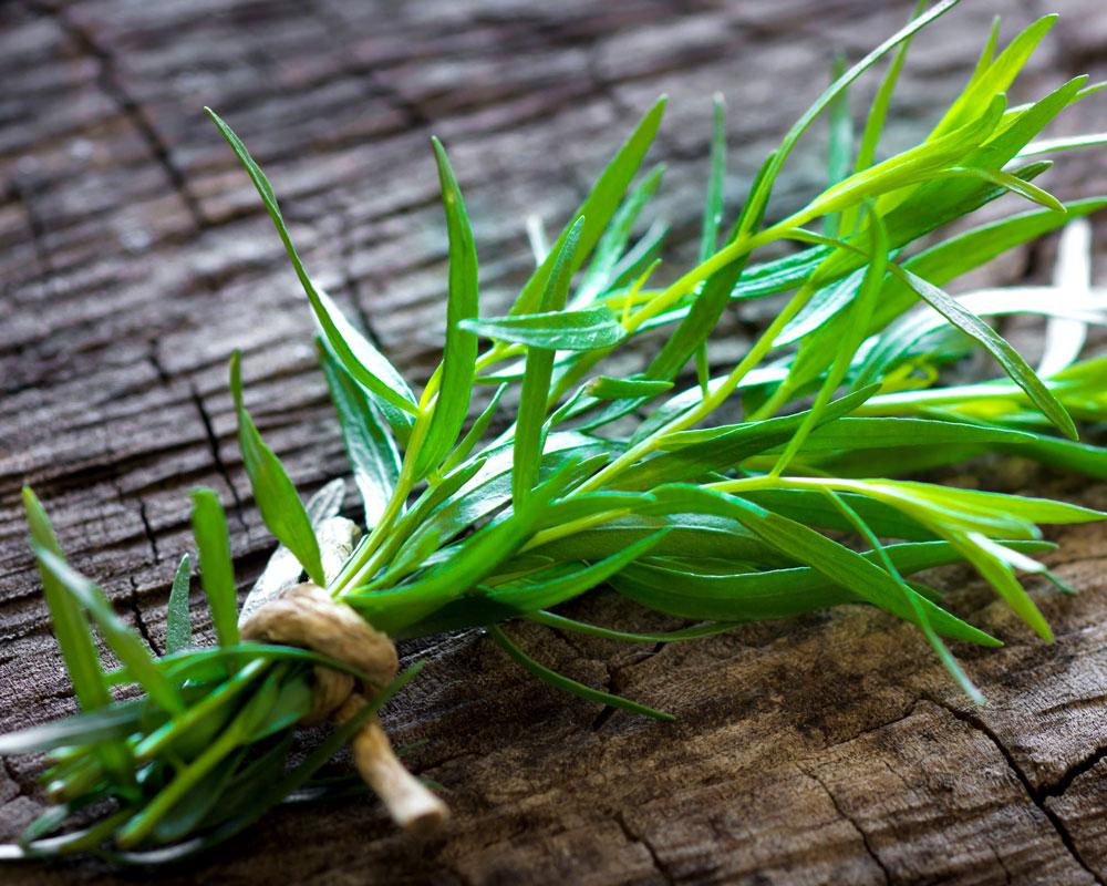 Dragoncello vaso 14 piante aromatiche officinali il mio orto cucina