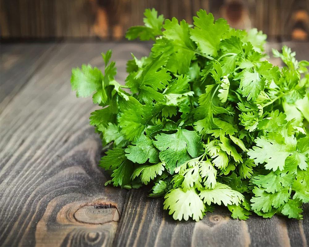 coriandolo piante e fiori aromatiche orto e aromatiche cucina aromi.2