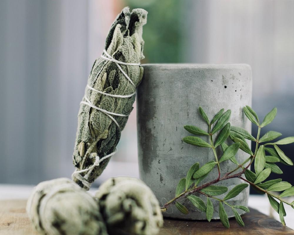 incenso vaso 16 piante verdi