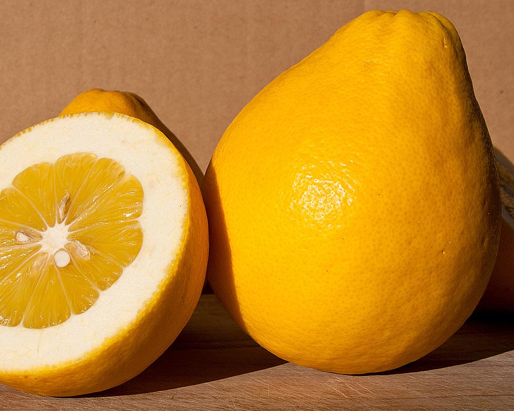 limone lumia fitocella