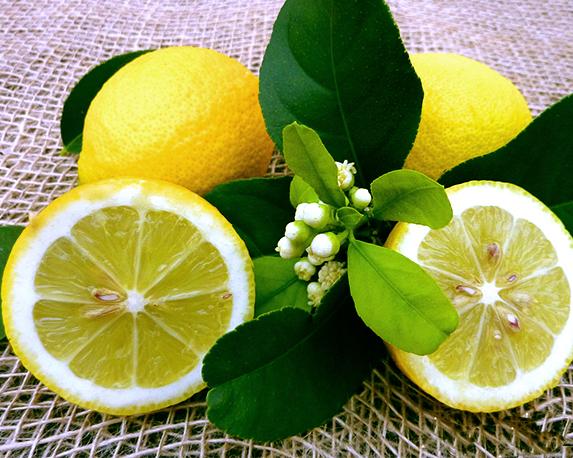 limone zagara bianca12012014 029