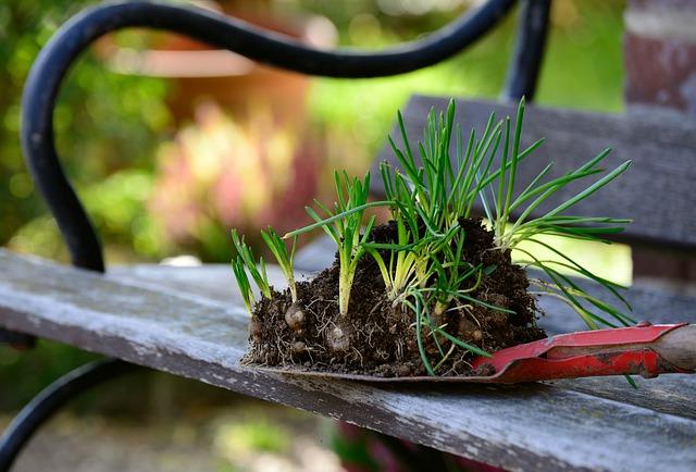 rinvaso delle piante