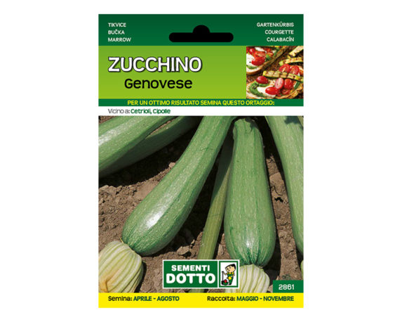 Zucchino Genovese