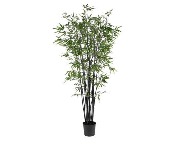 Bamboo Nero 175h