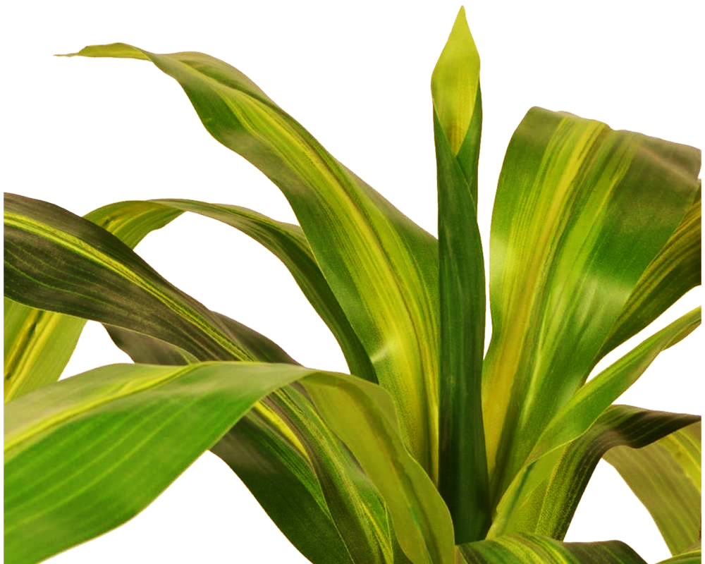 DRACAENA 60CM REAL TOUCH IN VASO 72532411 1