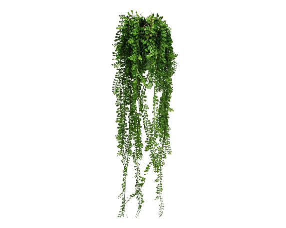 Pianta Grassa Cadente Artificiale In Vaso H85