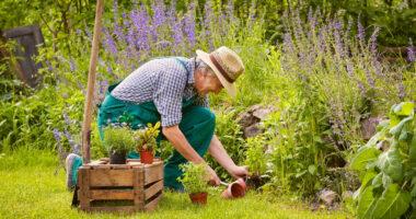 Festa Del Papà Giardinaggio