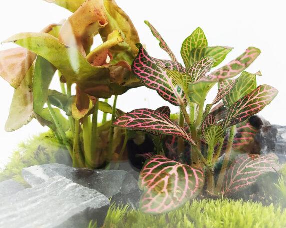 terrario piante 10044899 1