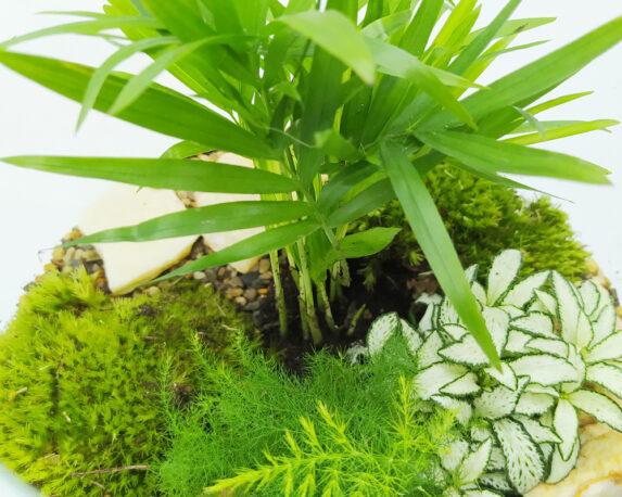 terrario piante 10044901 1
