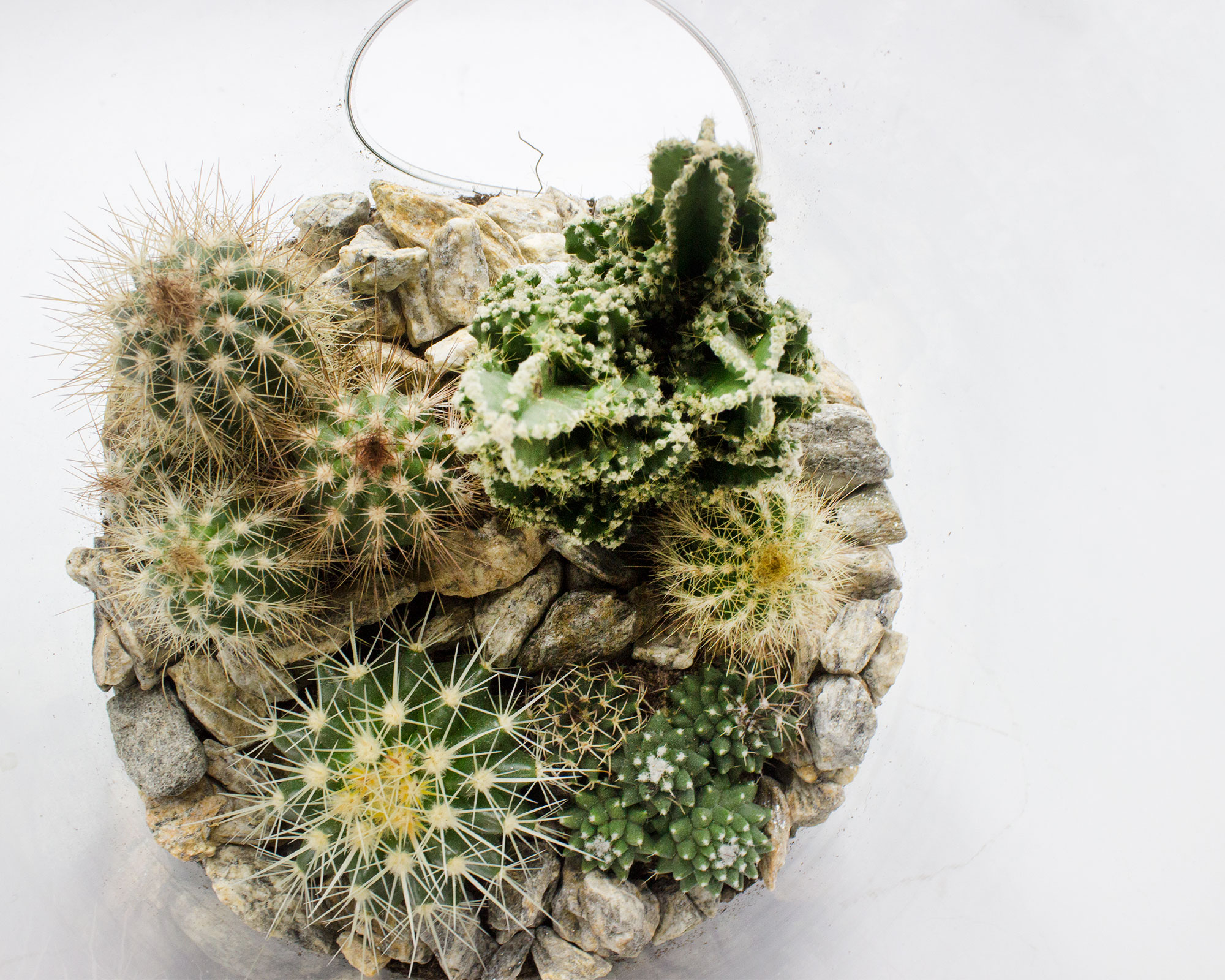 terrario piante grasse vetro h35 v19 1